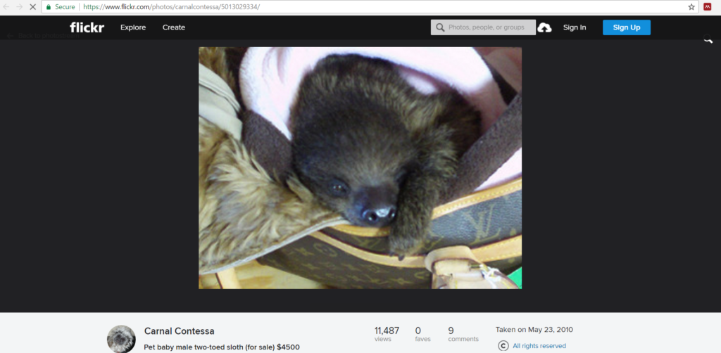 """Carnal Contessa"", the founder of the Zoological Wildlife Conservation Center, selling a baby sloth online"