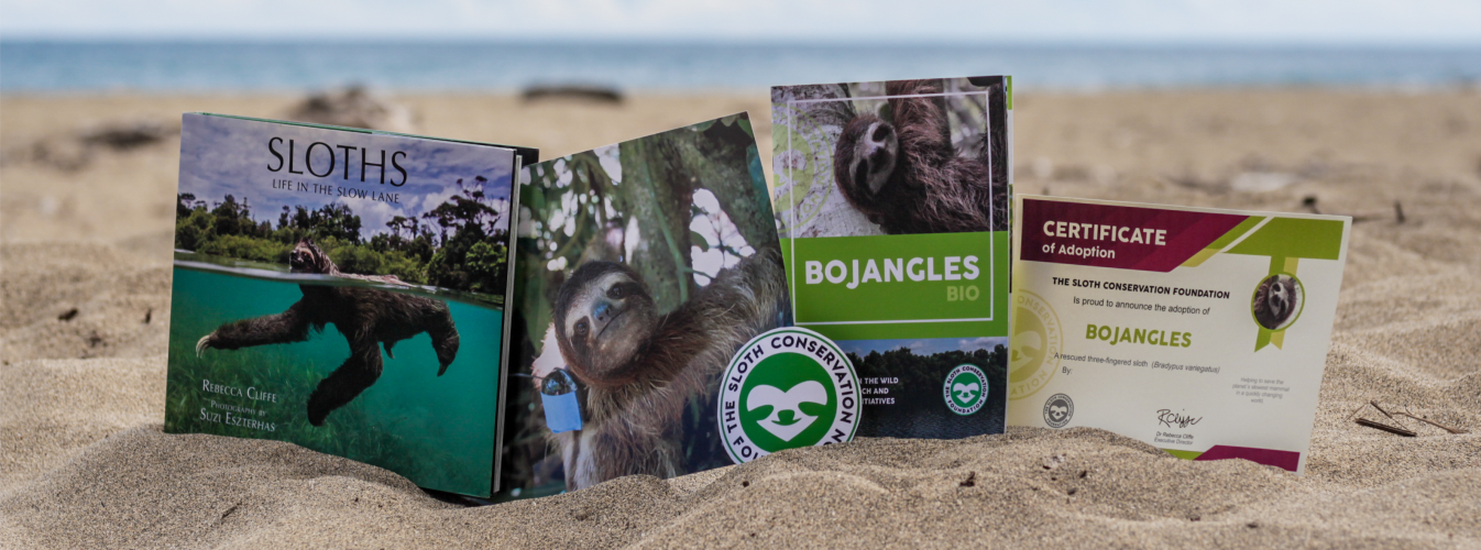 adopt a sloth pack