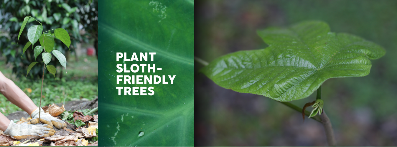 plant sloth trees