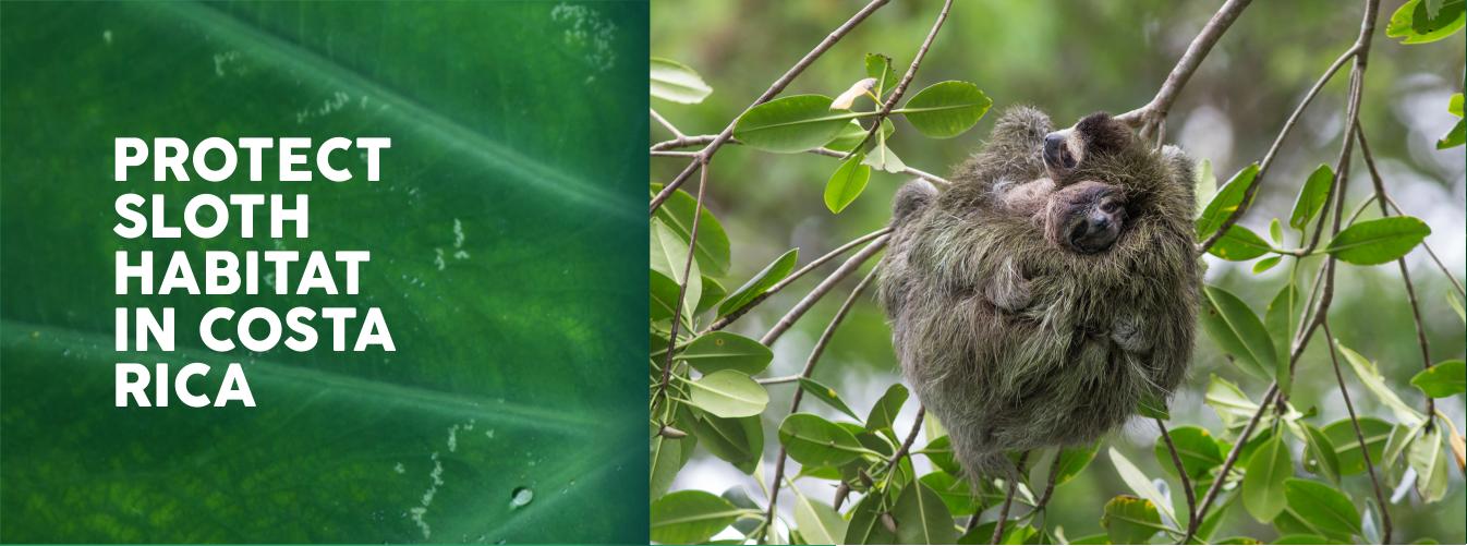 protect sloth habitat