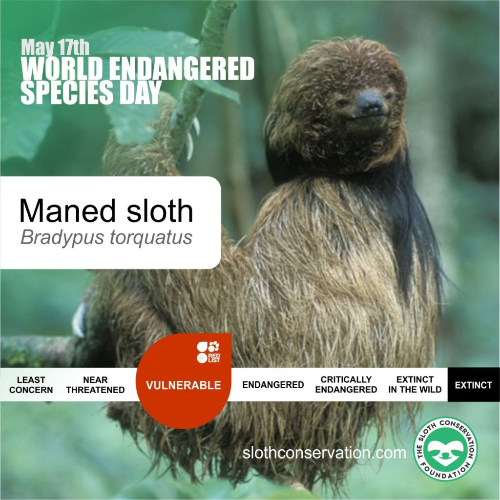 17 endangered maned