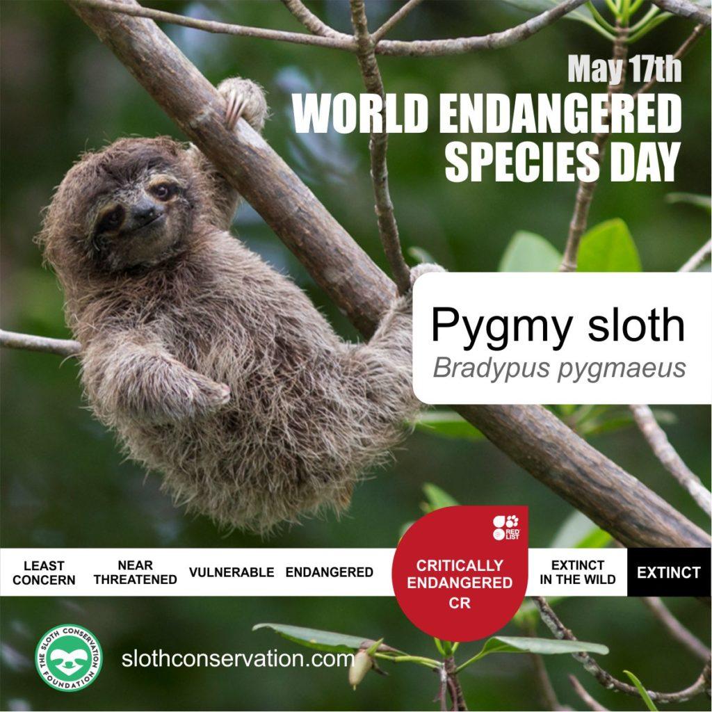 17 endangered pigmy