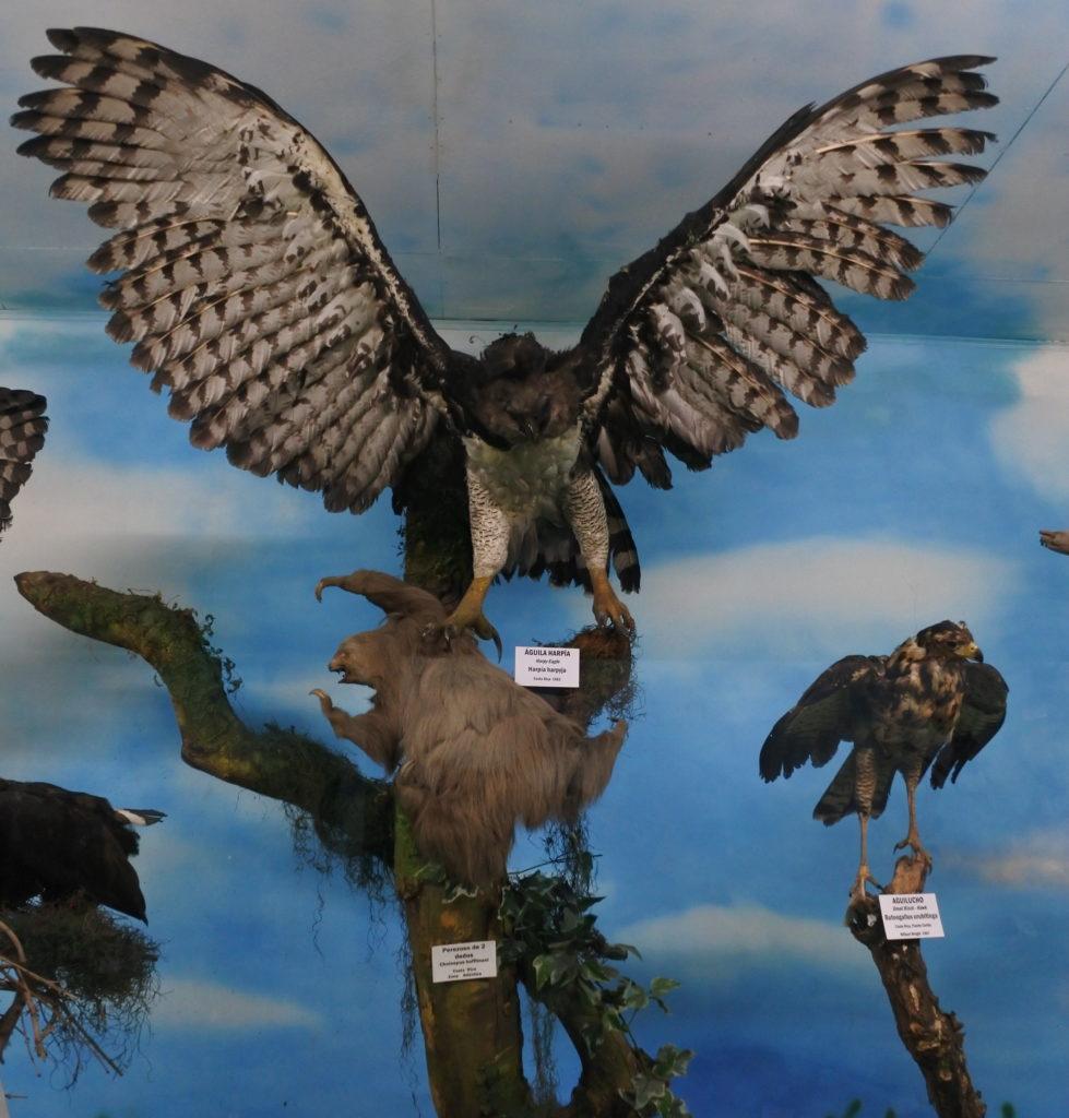 harpy eagle sloth
