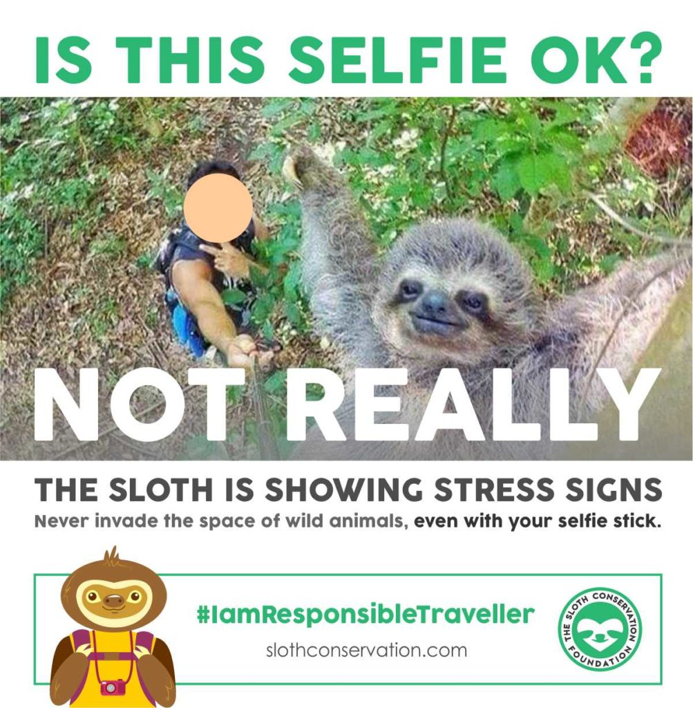 selfie stick sloth
