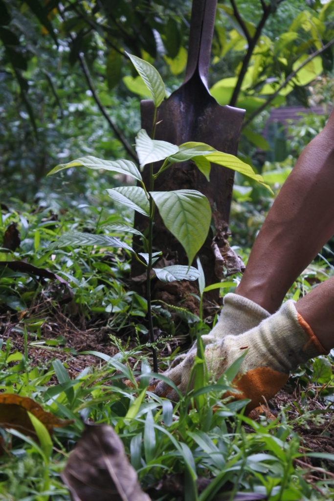 hands planting treeling