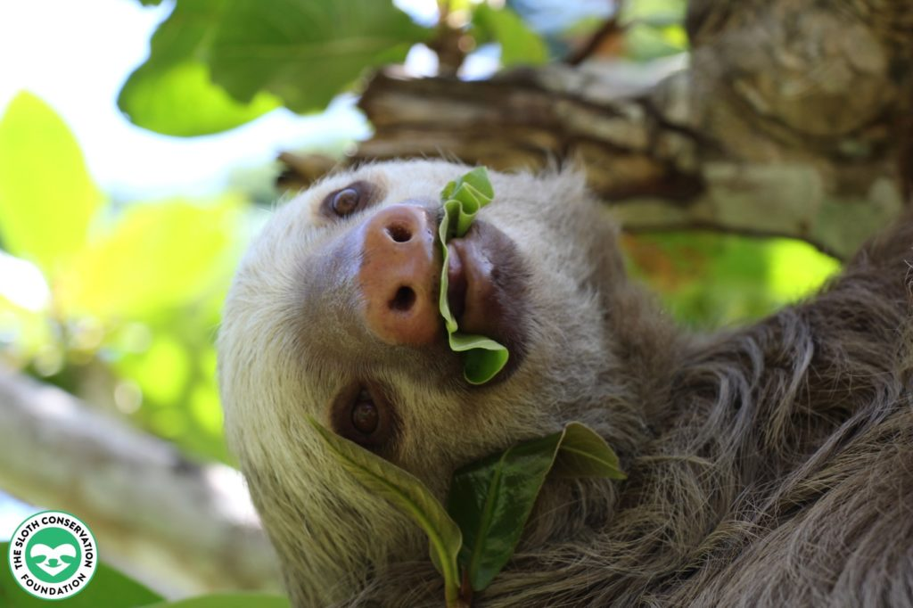 sloths top the list as our favorite oddballs!