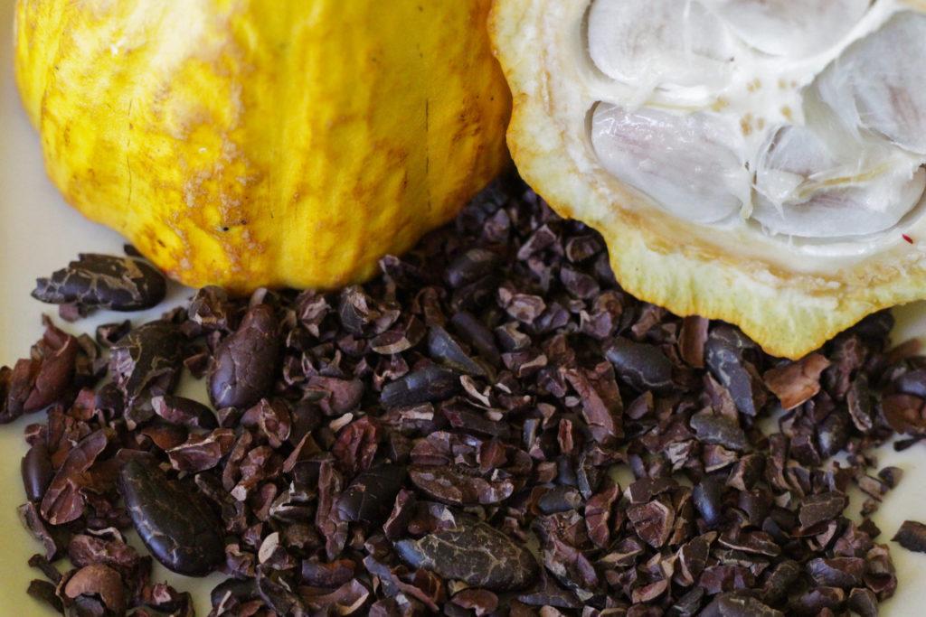 chocolate cacao sloths