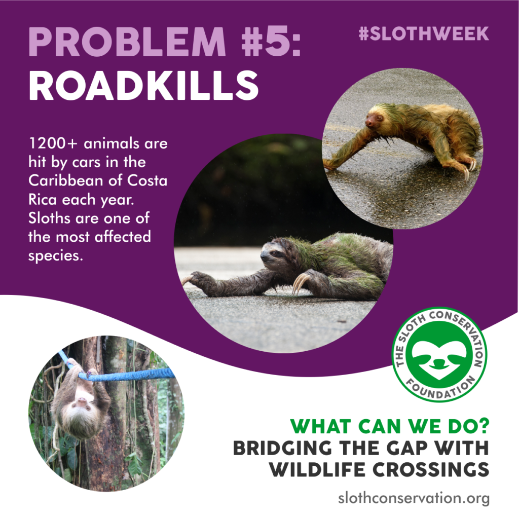 roadkills sloths