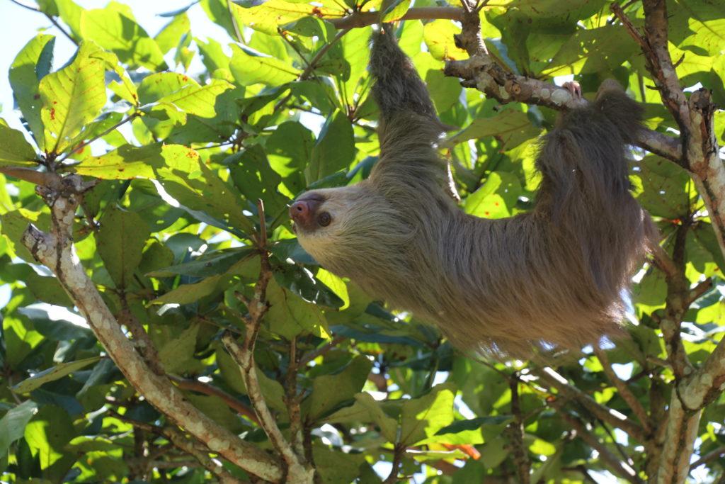 sloth respect