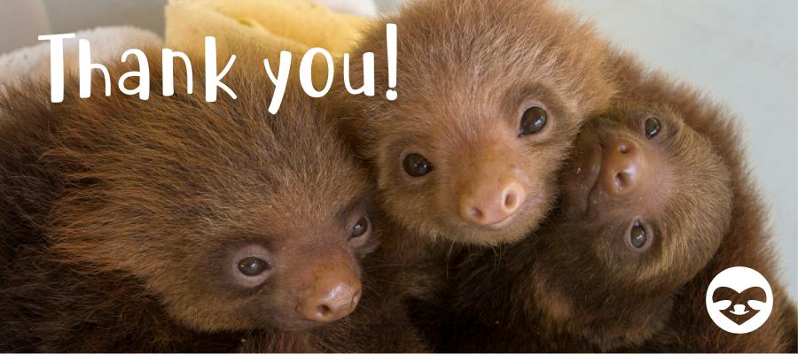 cute baby sloths suzi eszterhas