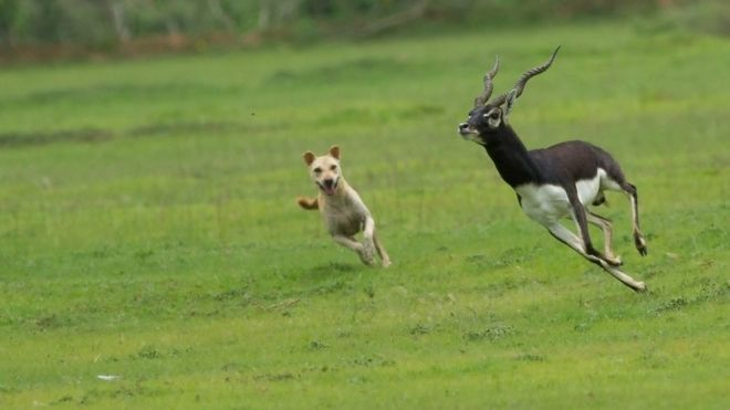 dog attacking wildlife