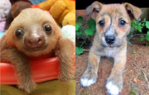 baby sloth and dogs puppy