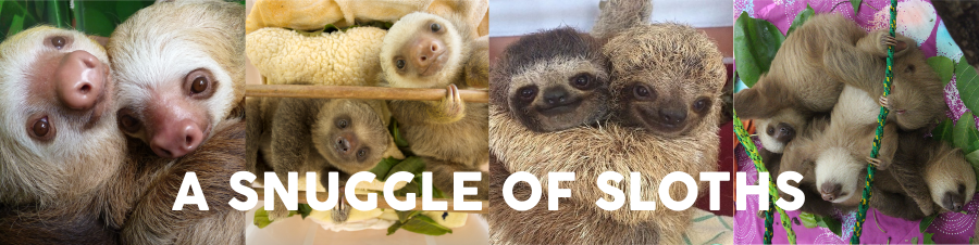 snuggle of sloths