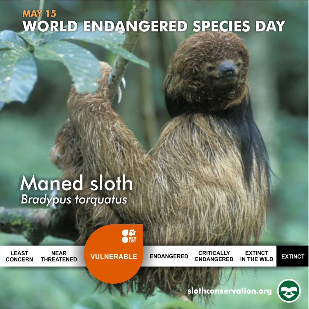 may social media maned sloth