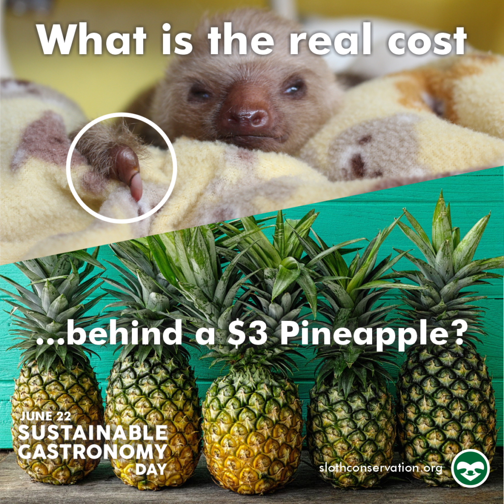 sustainable gastronomy day sloth pineapple