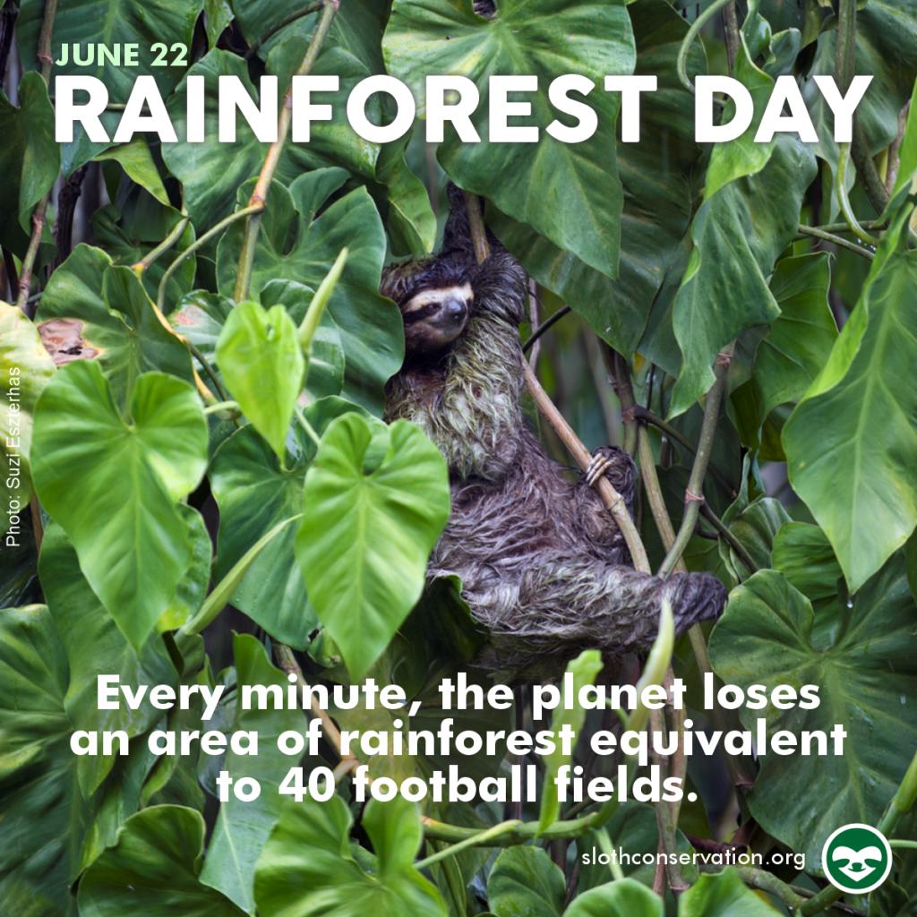 rainforest say june social media