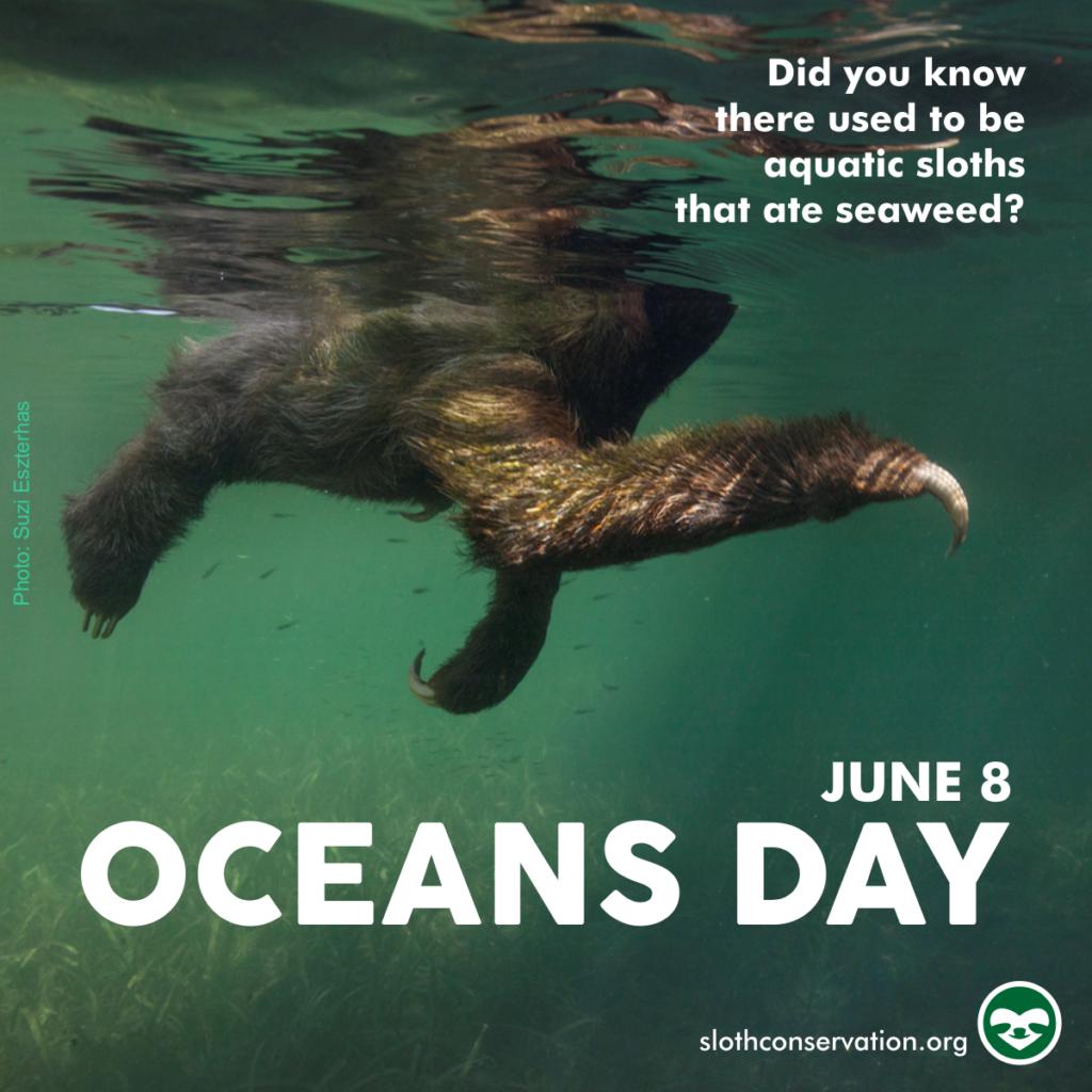 oceans day june sloth