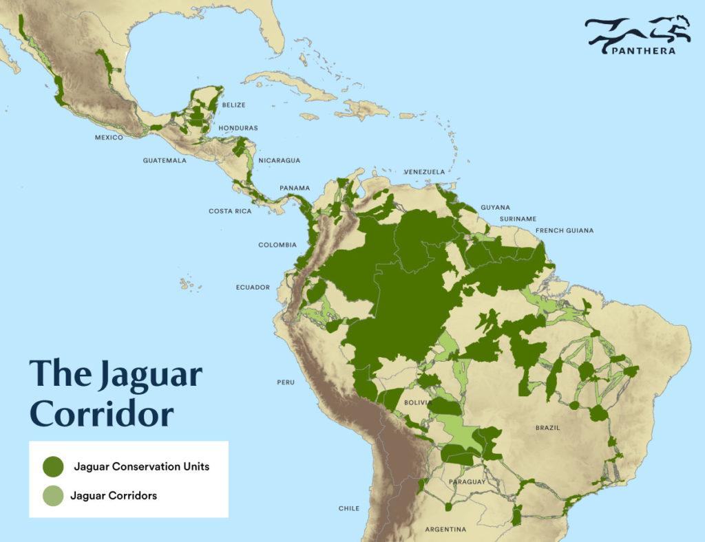 jaguar corridor panthera mesoamerican