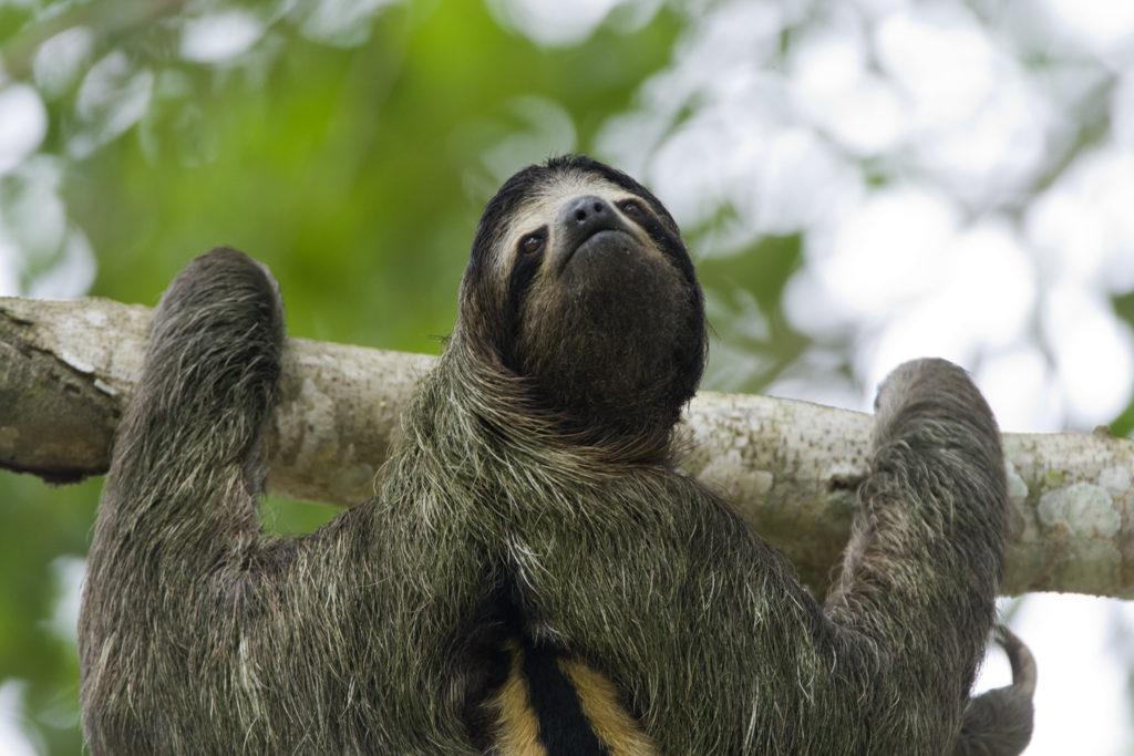 sloth turns head 270