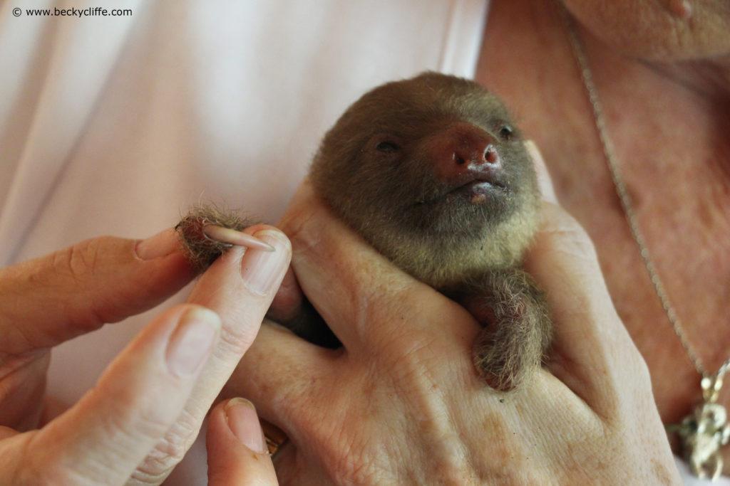 sloth genetic deformities