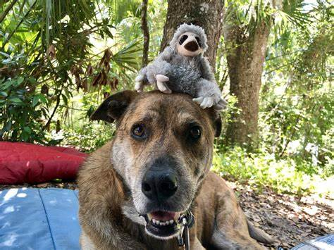 dogs with toy sloth on head