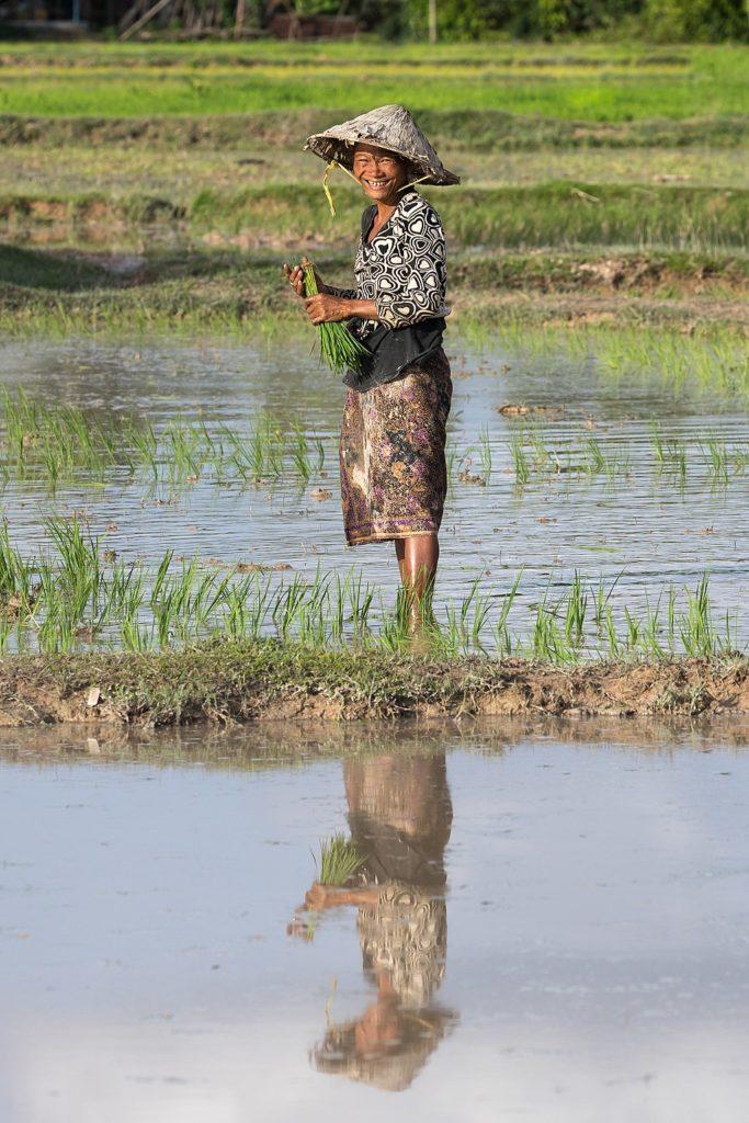 woman farmer rice fields