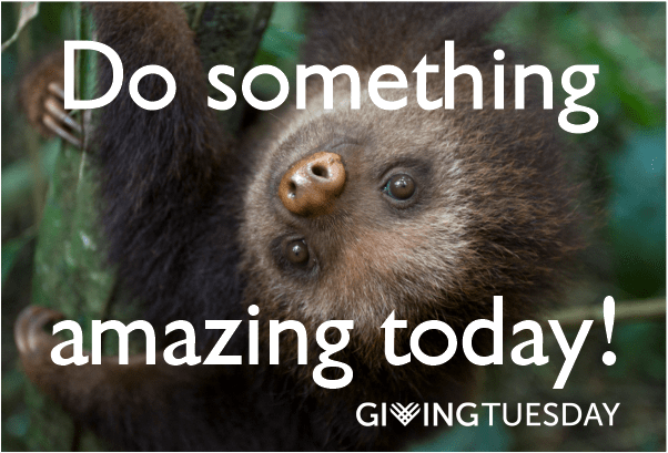 giving tuesday sloths