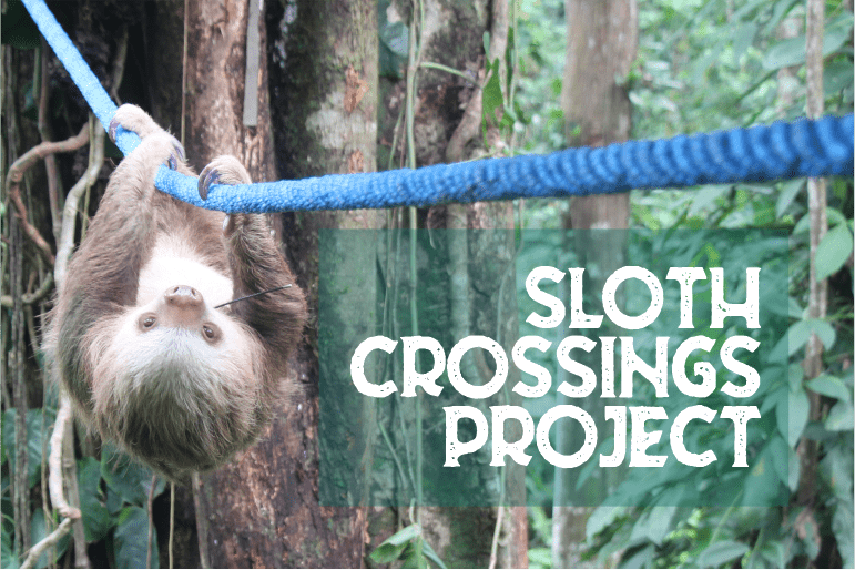 sloth bridges