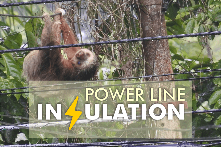 power line sloth