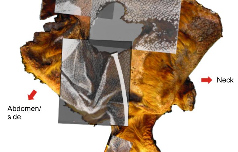 armor skin