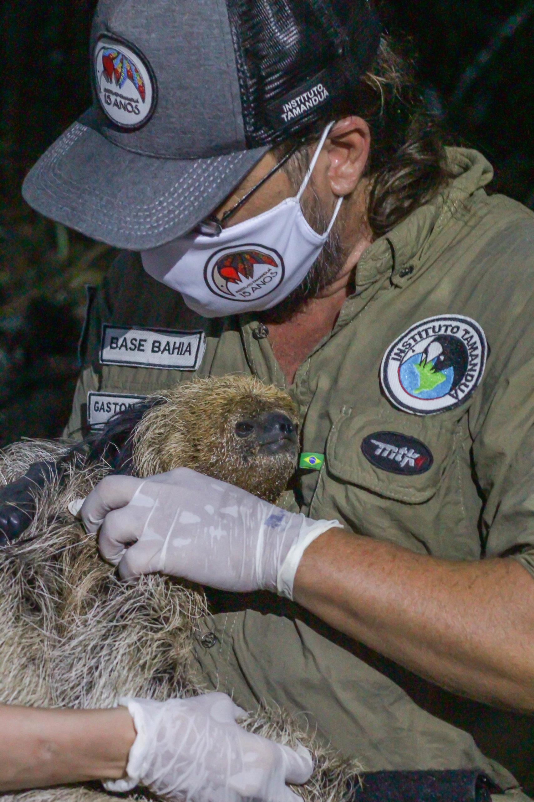 Maned sloth brazil