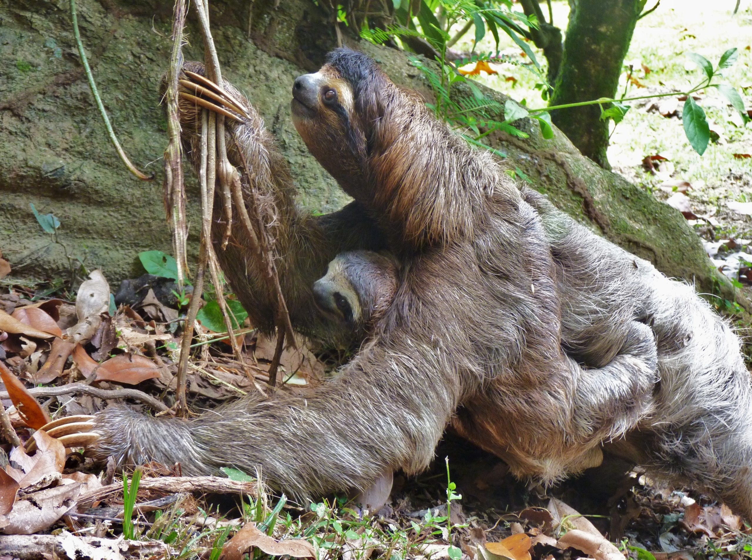 sloth mom mother