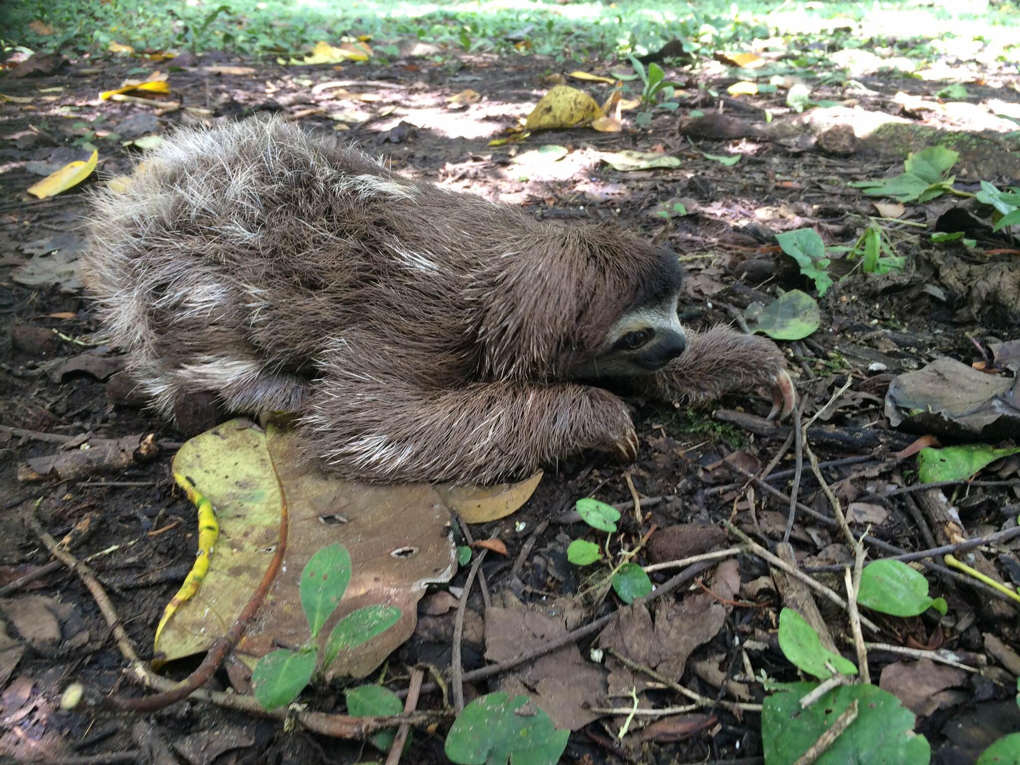 sloth ground