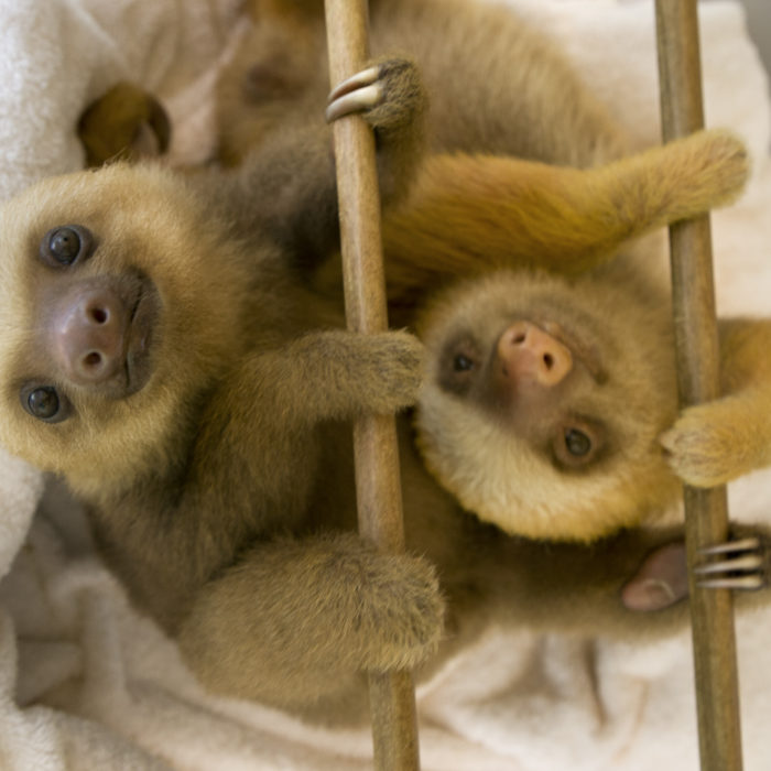 sloth mom clinging
