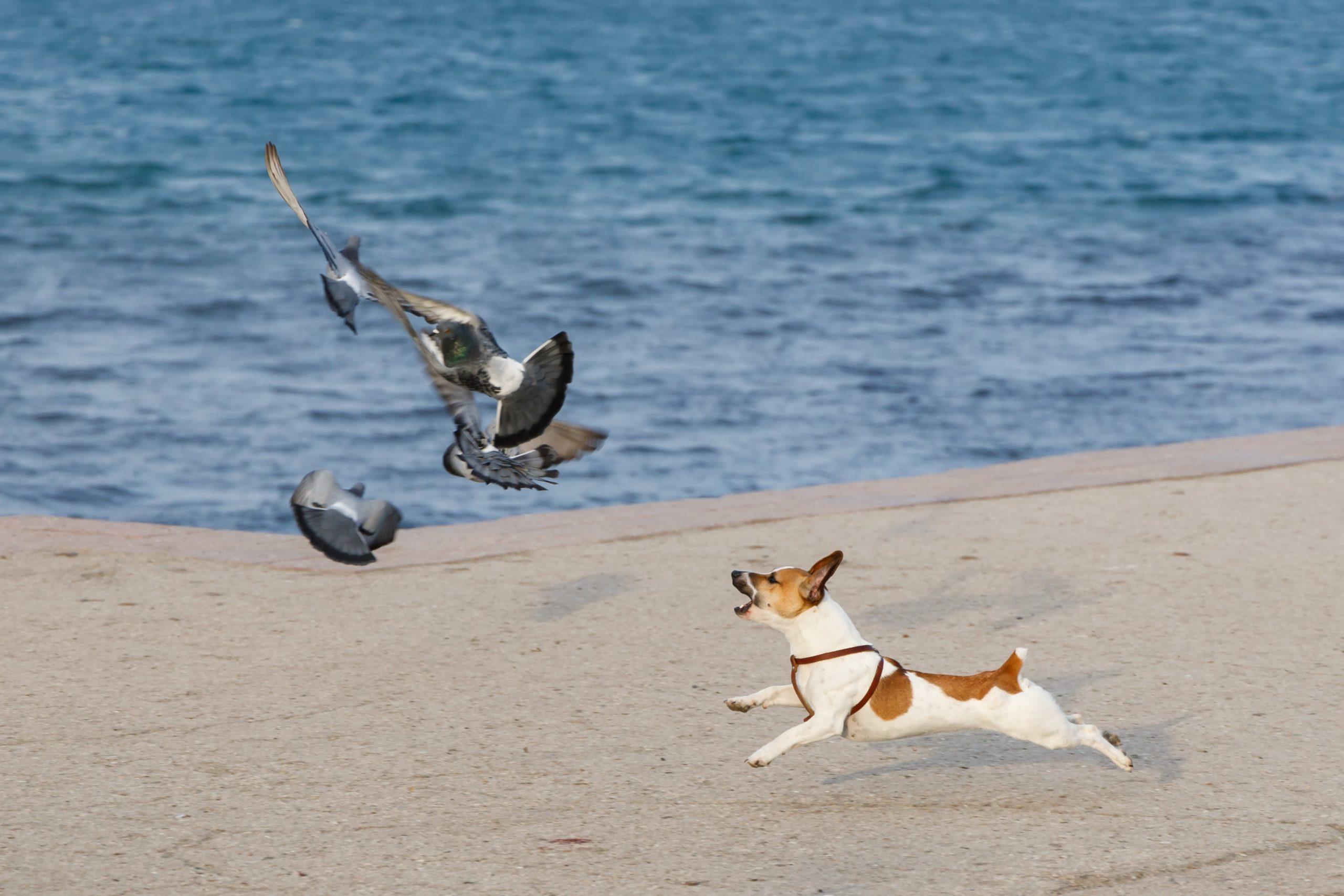 dog attack wildlife