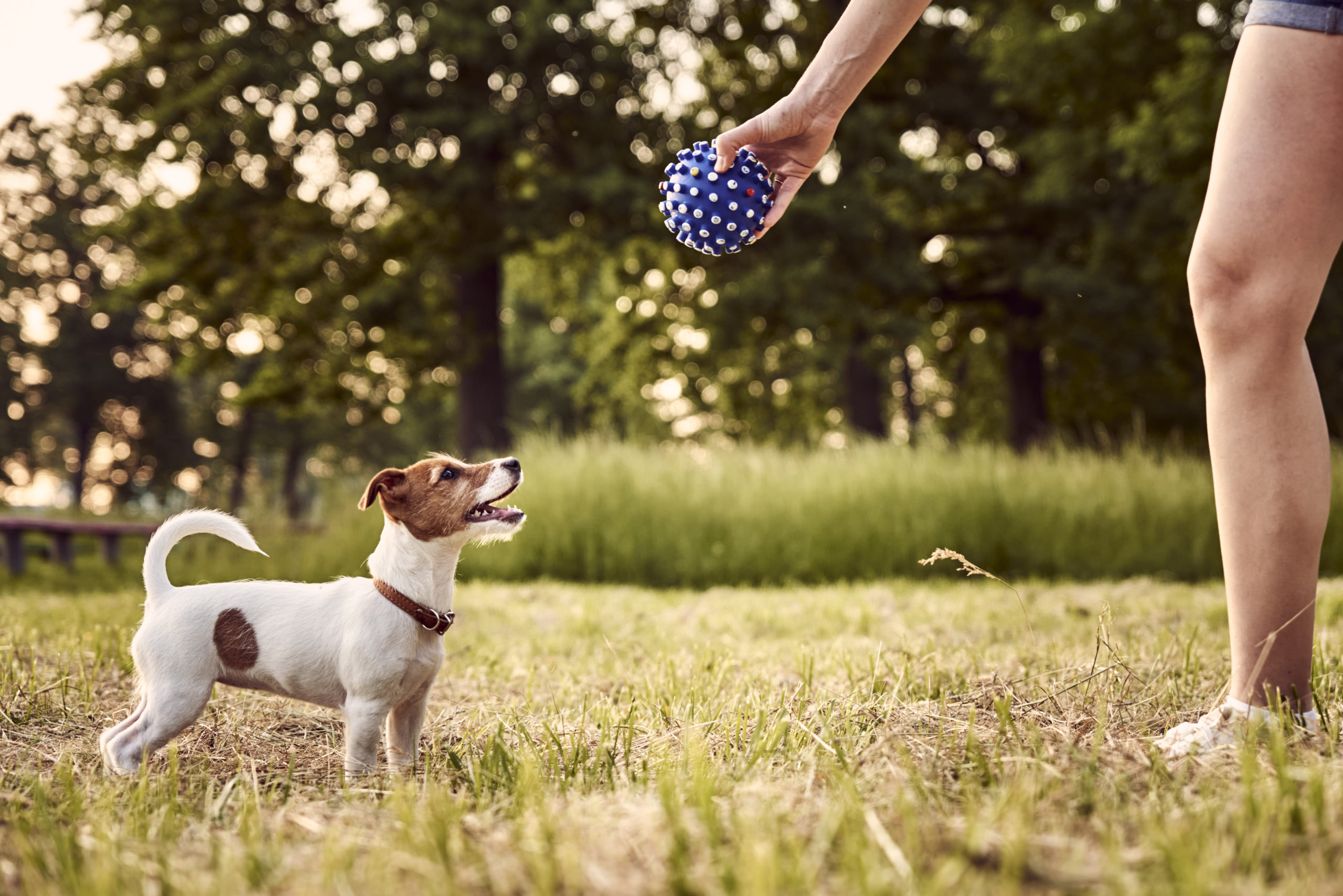 dog toy trainning
