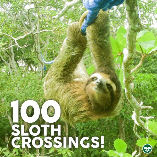 sloth crossings