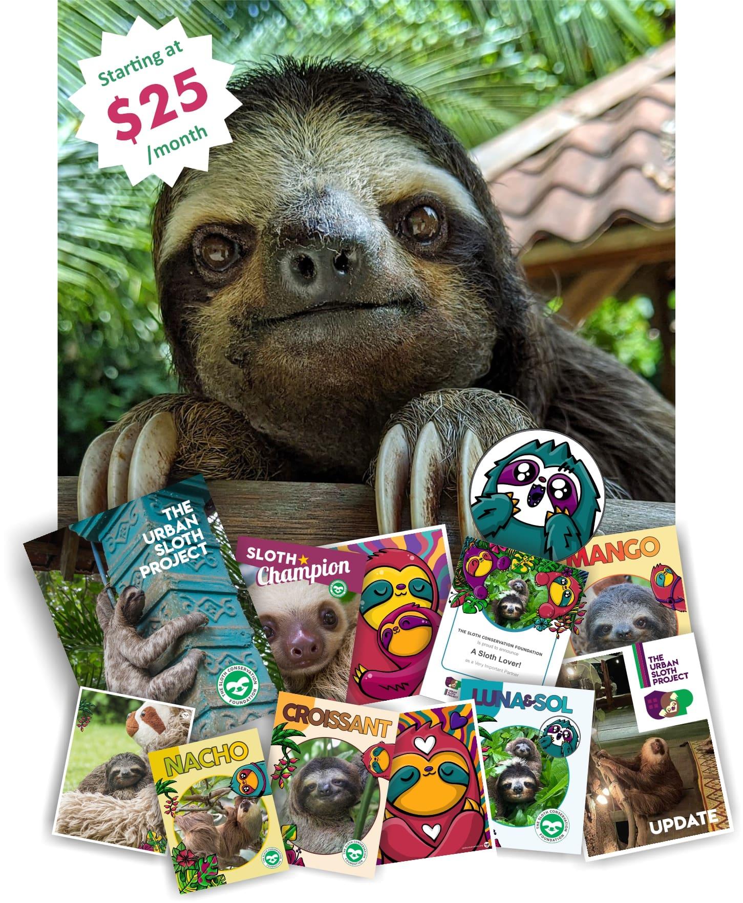 urban sloth project vip subscribe
