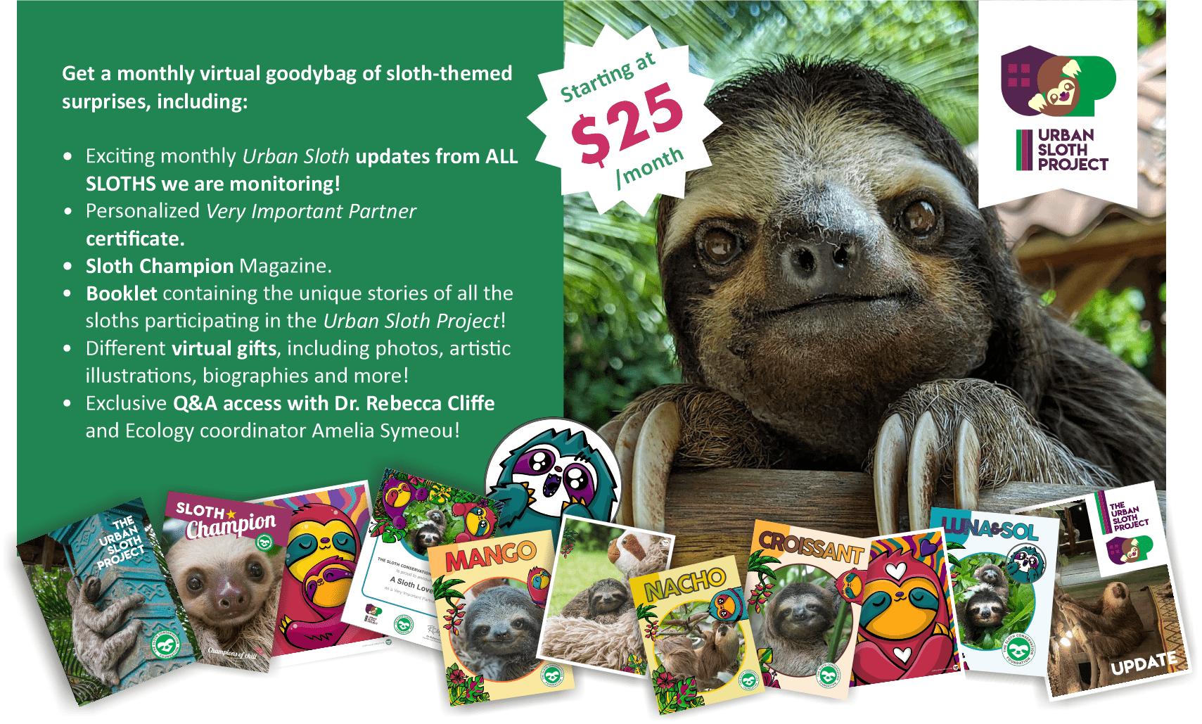 adopt a sloth subscribe